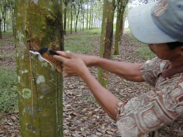 natuurlijke-betovering-sumatra-19dagen-2